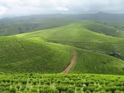 Mambilla Plateau, Taraba