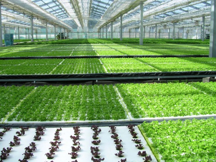 Hydroponics-source-lerablog.org_